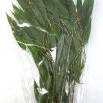 竹の葉・プリザーブド・小枝(グリーン)