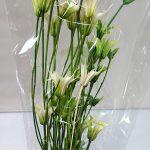 ニゲラオリエンタリス 白/グリーン