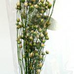 リンフラワー・ミニ(白/グリーン)