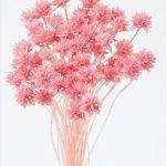 ミニコーンフラワー ピンク