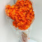 FLDR0014-820 マルセラ ドライ オレンジ