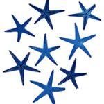 スターフィッシュ #33 ブルー