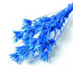 FLDR0025-870 ニゲラ ドライ ブルー