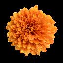 ボールマムピック (4本束) マンダリンオレンジ
