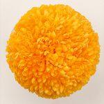 ポンポン菊 フルーティオレンジ