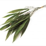 お正月小束・竹の葉 グリーン